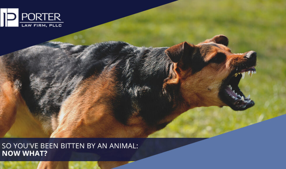 Animal Attack Law